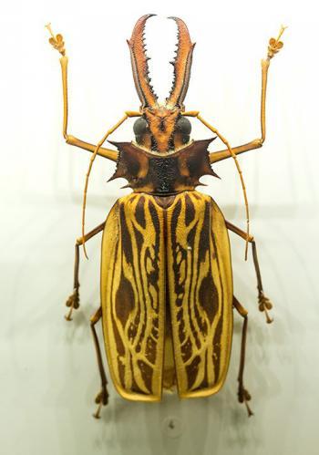 montreal-botanic-garden-insectarium-2