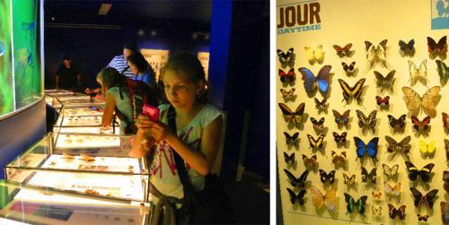 montreal-botanic-garden-insectarium-3