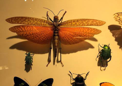 montreal-botanic-garden-insectarium