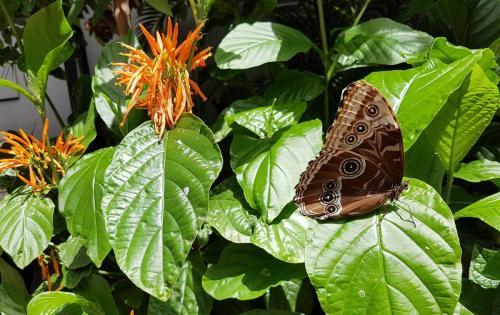 montreal-botanic-garden
