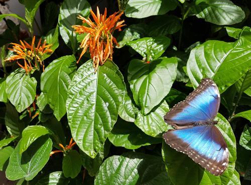 montreal-botanic-garden11