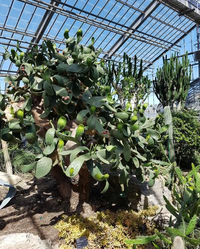 montreal-botanic-garden12