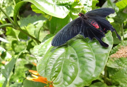montreal-botanic-garden2