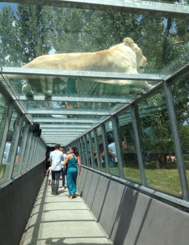 parc-safari-lions