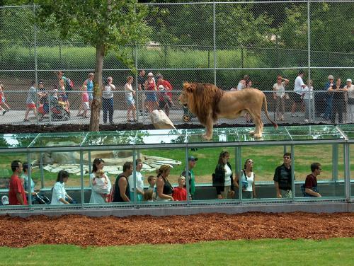 parc-safari-lions3