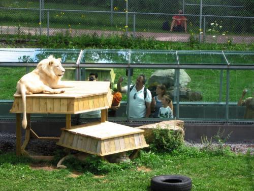 parc-safari-lions4